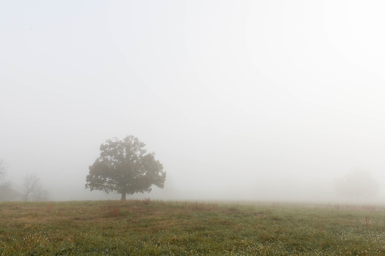 foggy-1030903_1280