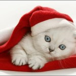 Nem csak az emberek várják a karácsonyt