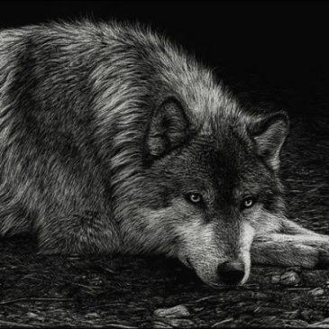 Elfogták a kerekerdei farkas bántalmazót